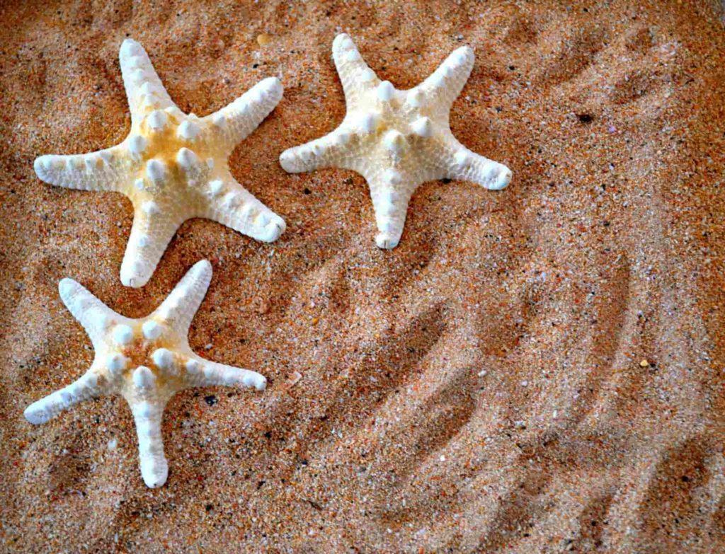 Les étoiles De Mer Sont Lu0027élément Décoratif Idéal Pour Les Chambres  Nautiques Ou Une Salle De Bains Où Vous Souhaitez Ajouter Une Touche De Bord  De Mer.